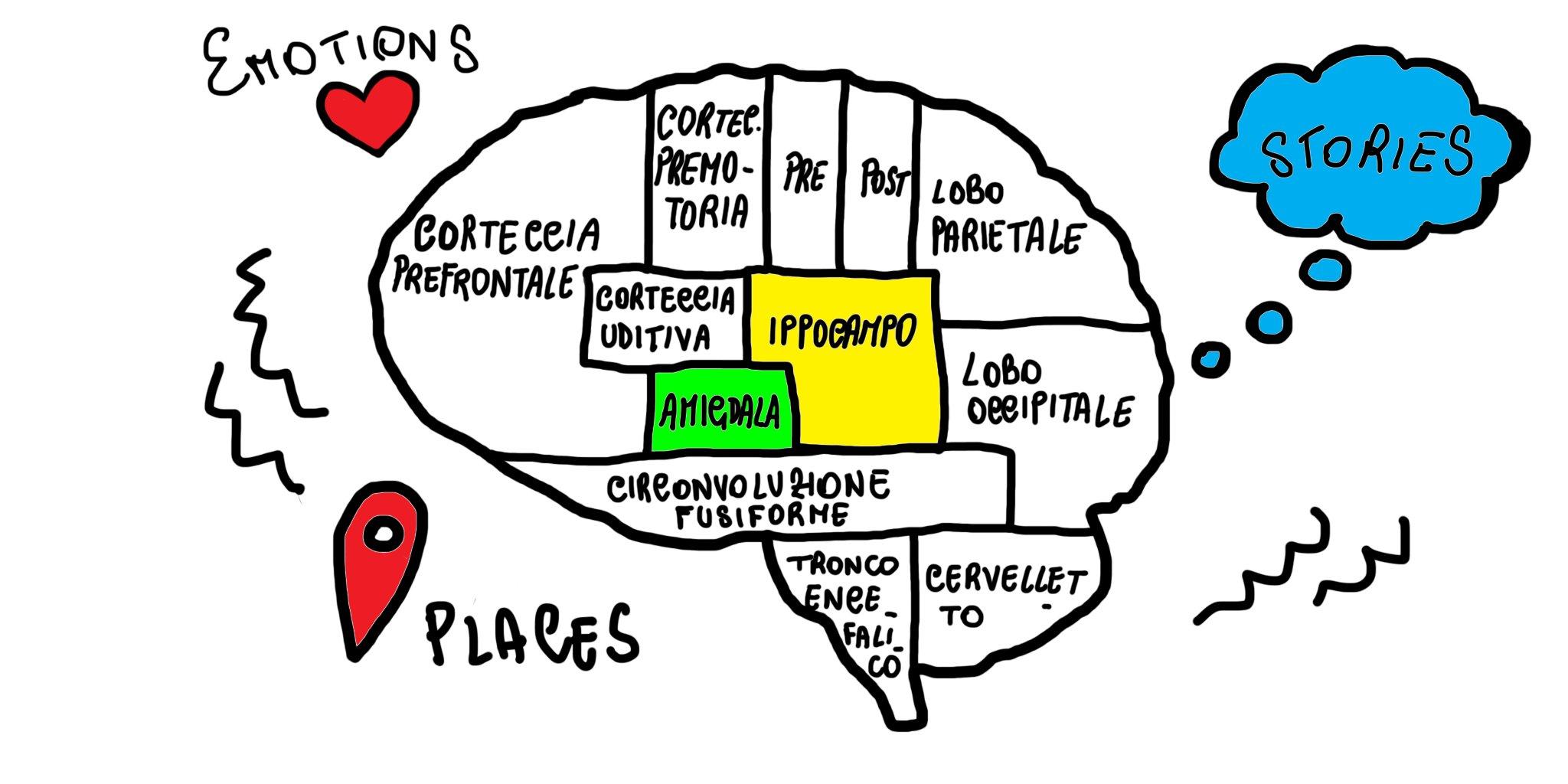 Il coinvolgimento di Amigdala e Ippocampo nella fissazione dei ricordi